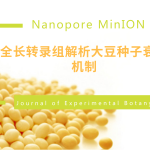 Nanopore全长转录组解析大豆种子衰老机制