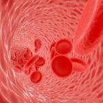 Circ Res|血管平滑肌细胞富含作为miRNA-145海绵的Circ_Lrp6