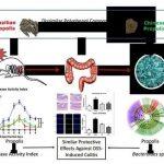 小鼠肠道微生物多样性成功案例–蜂胶能预防结肠炎吗?