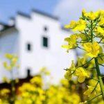 百迈客合作 | Molecular Plant千份油菜生态差异分子研究