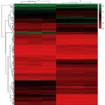 转录组测序助力提高白血病疗效的治疗策略的探究