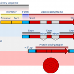 基因结构预测新利器-ONT全长转录组