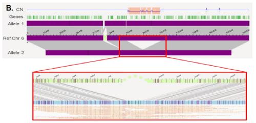 在白血病患者基因组中发现的27 Mbp缺失
