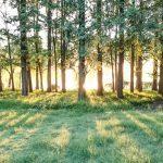 植物基因组研究思路(一)林木篇