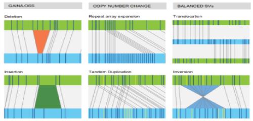 光学图谱(蓝)与参考序列(绿)比对检测结构变异