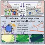 CELL | 空间转录组技术辅助揭示阿尔兹海默症中淀粉样蛋白斑诱导的转录组改变