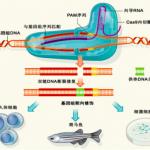 基因组与新兴生物技术整合研究思路拓展