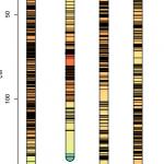 遗传图谱绘图小工具——R包LinkageMapView