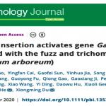 【项目案例】亚洲棉无短绒性状的遗传机制研究 | Plant Biotechnol J.