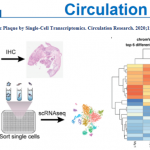 """单细胞多组学占领高分""""阵地""""-  人动脉粥样硬化斑块的转录和表观基因组特征"""
