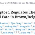 【成功案例】转录组多组学解析揭示Tfr1基因对米色脂肪组织的产热能力以及分化的影响
